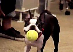 Dog-with-Ball-B2