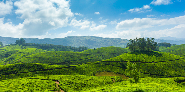 Munnar Tourism - The Ideal Standout Honeymoon Destination