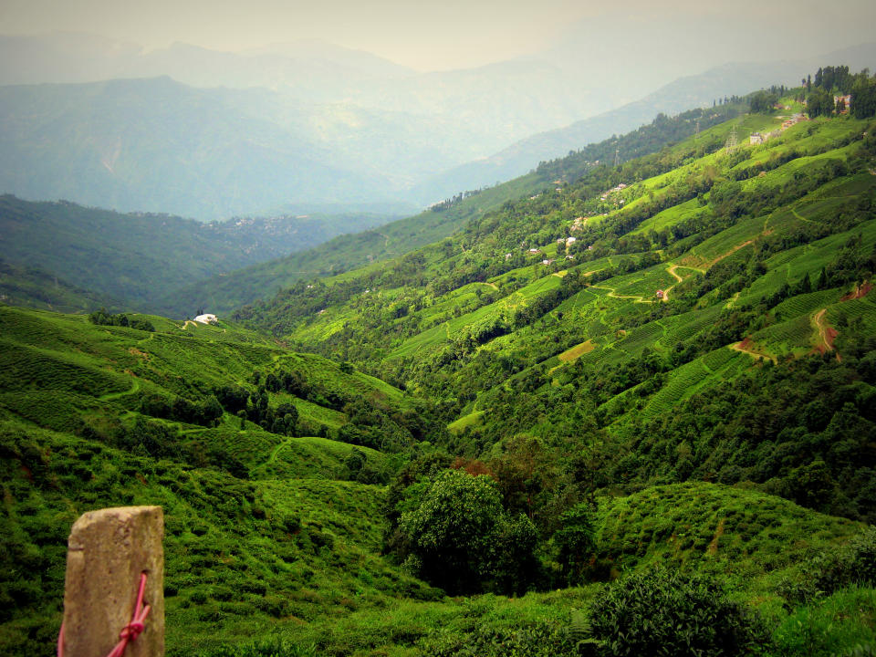 A Tour To Darjeeling: Experiencing Nature In Its Pristine Form