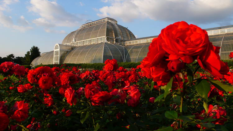 Kew Botanical Gardens, United Kingdom