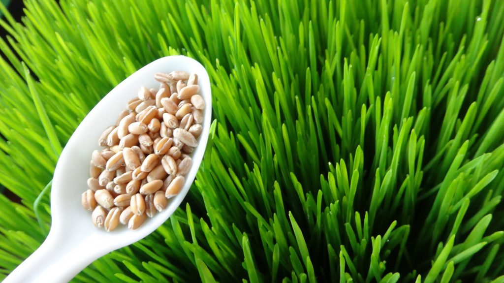 Great Foods To Help Stop Cancer Naturally