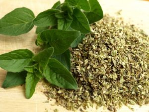 Top 6 Reasons Why You Need Oregano Herbs In Your Kitchen