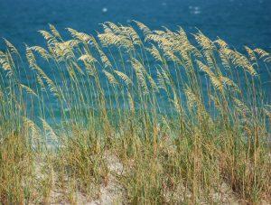 The Carolina Coast