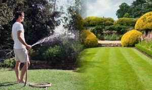 A Guide to Maintain Lush Green Lawns